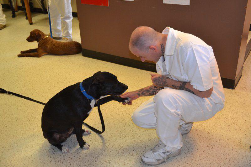 An inmate's best friend