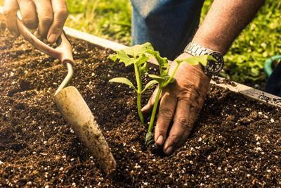 Master gardeners plan presentation on spring vegetable planting