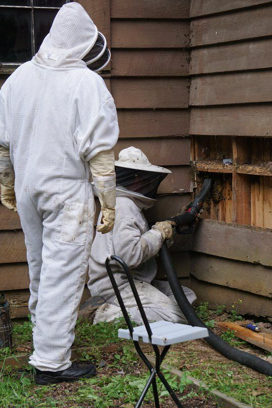 Save the bees: Hive discovered inside historic Raven Lodge