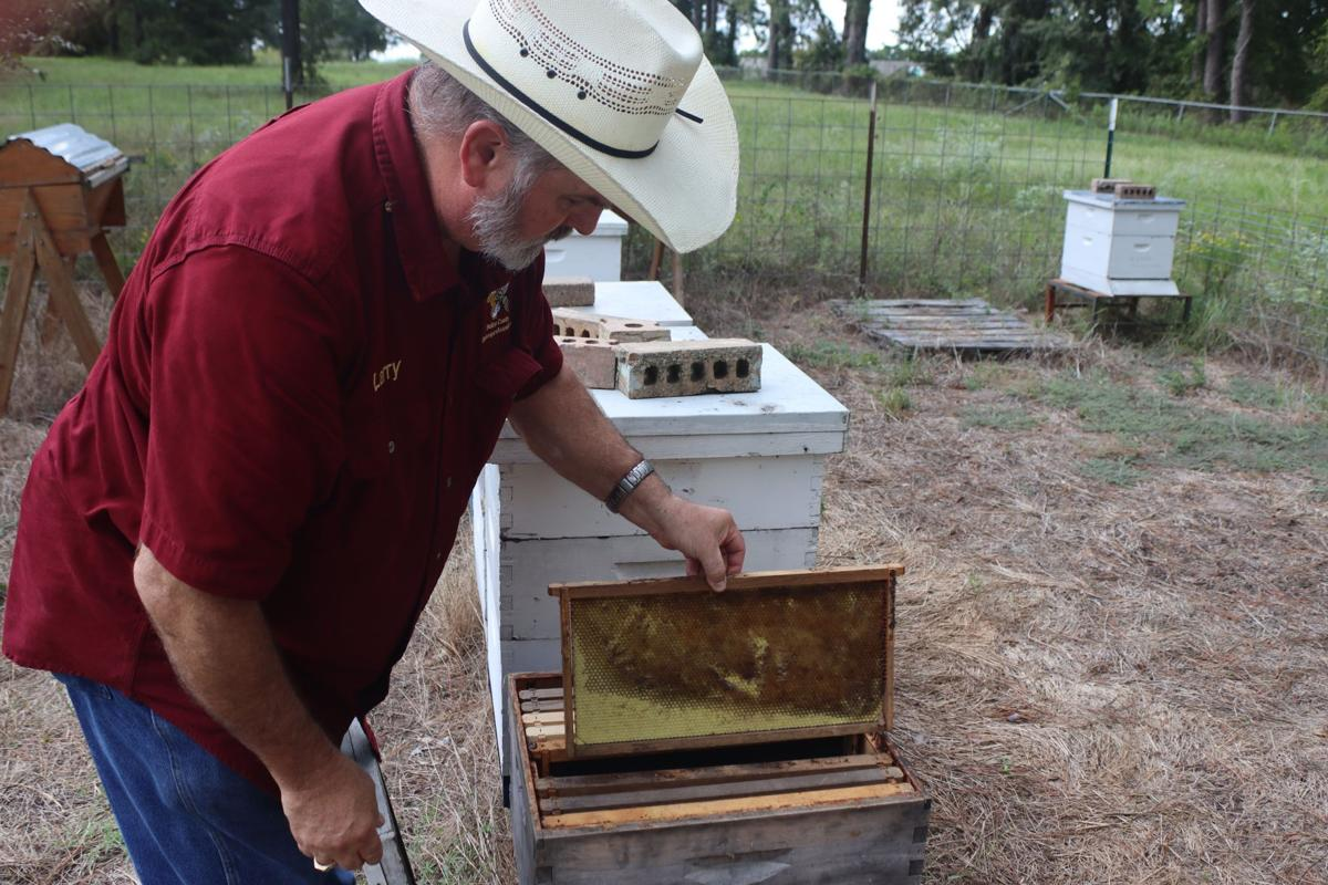 Beekeeping Becoming Even More Important As Demand Increases News
