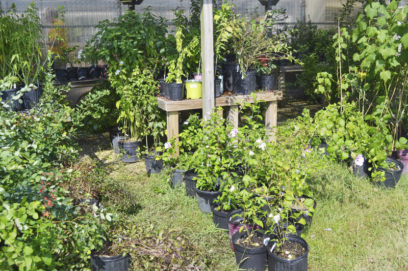 Gear up for fall gardening at Master Gardener\'s plant sale on Sept ...