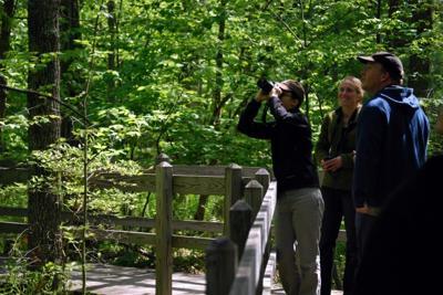Sapsucker Woods