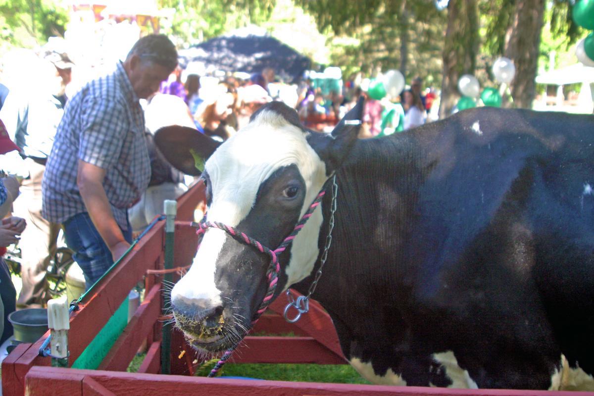 *Cow2.jpg