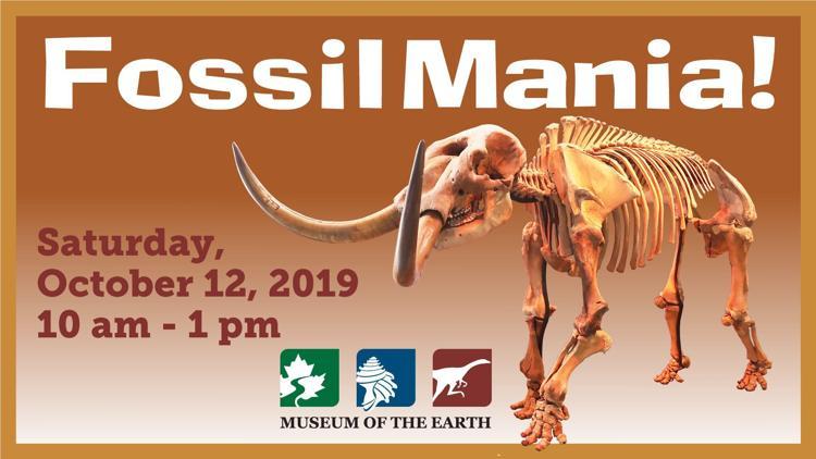 Fossil Mania