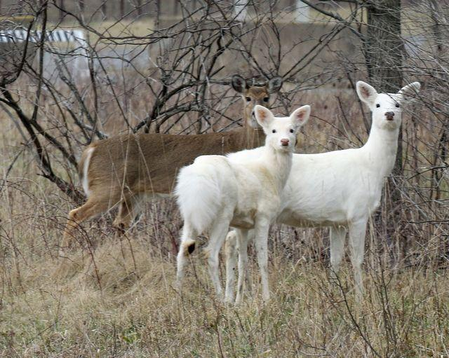Seneca Lake White Deer Tours