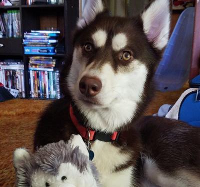 The Barillaro family's dog Chevy.