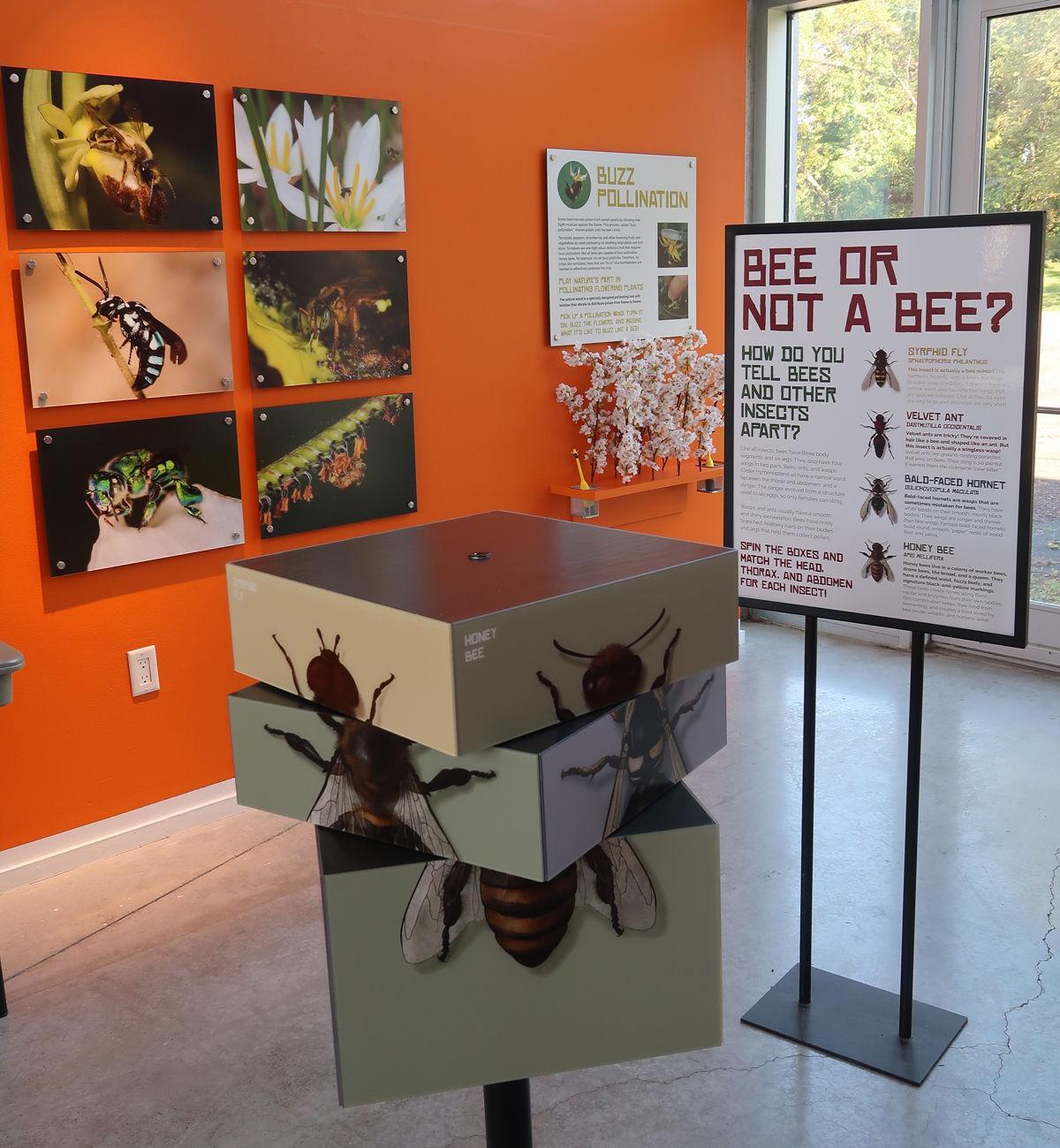 Bee display