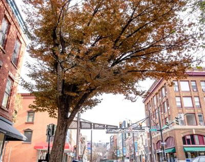 A Downtown Tree