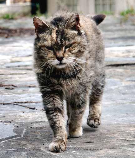 Pet Corner: The Feral Cat Problem | Pet Corner | ithaca.com on squirrel home, chipmunk home, fast cat home, ferret home, mountain lion home, lizard home, duck home, pet cat home, dog cat home, stray cat home, cat lady home, pig cat home,