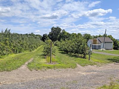 A portion of the Cornell Orchards located on 154 Sweazey Road in Lansing that is slated for sale.