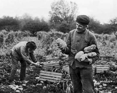 Potato farmers photographed by Verne Morton, part of the collections at The History Center of Tompkins County.