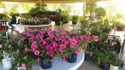 East Texas Arboretum of Athens to host plant sale