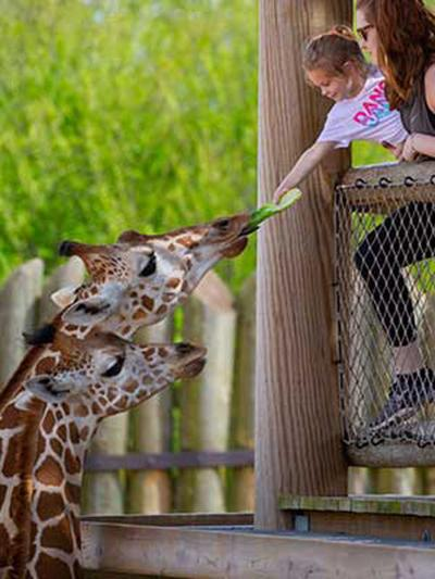Tyler's Caldwell Zoo back in business