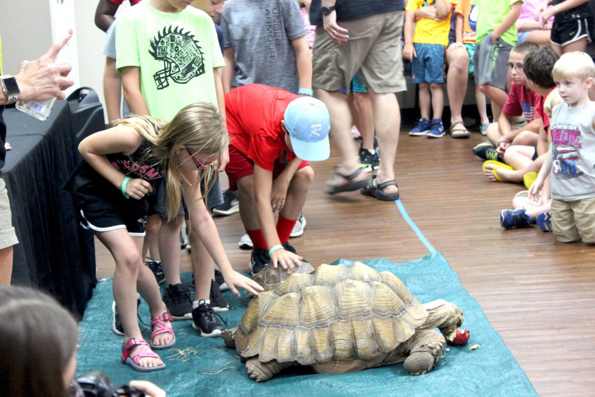Checking out a tortoise