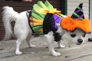 Costumed canines to congregate Saturday