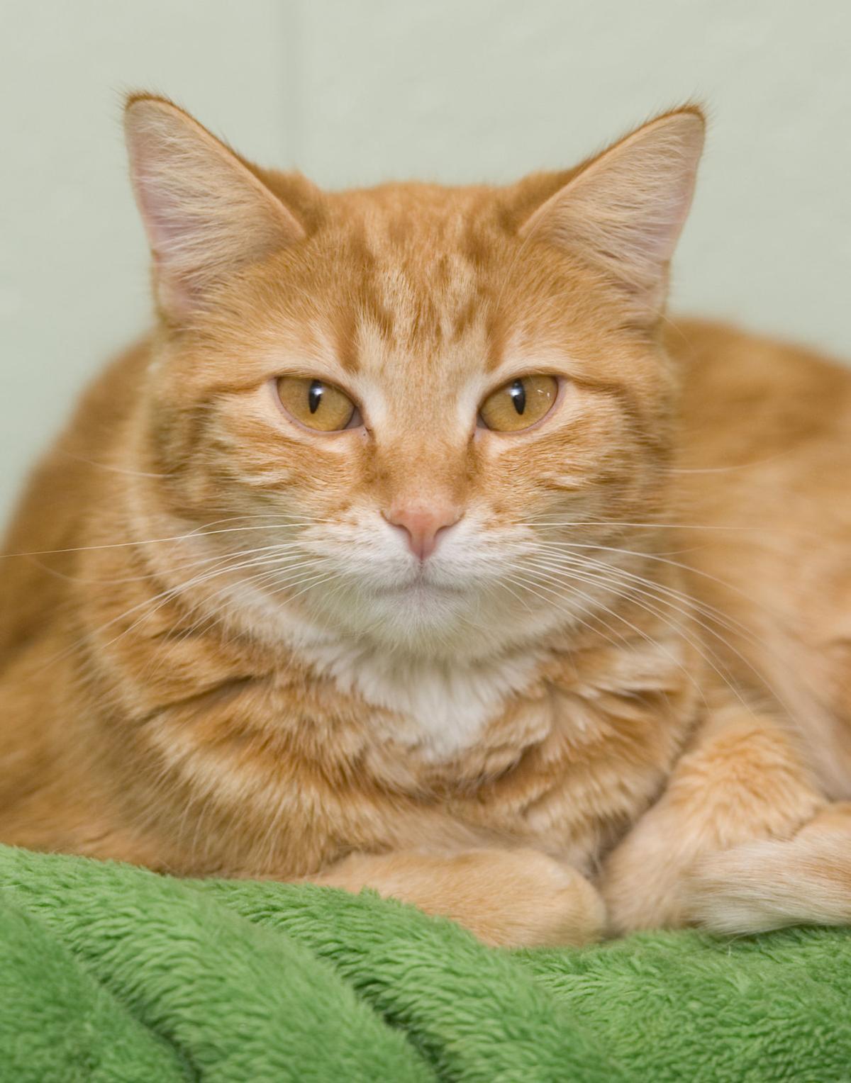 123017-mat-pets-cat-KK.jpg