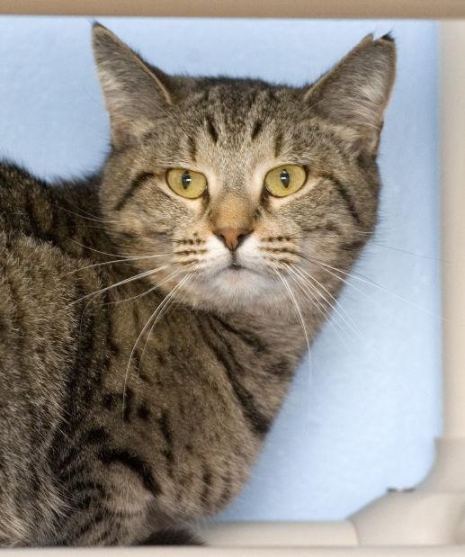 030715-mat-pets-cat-KK.jpg