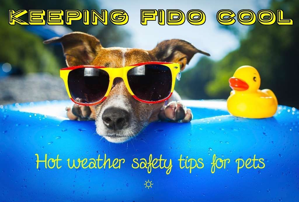 Keeping Fido cool