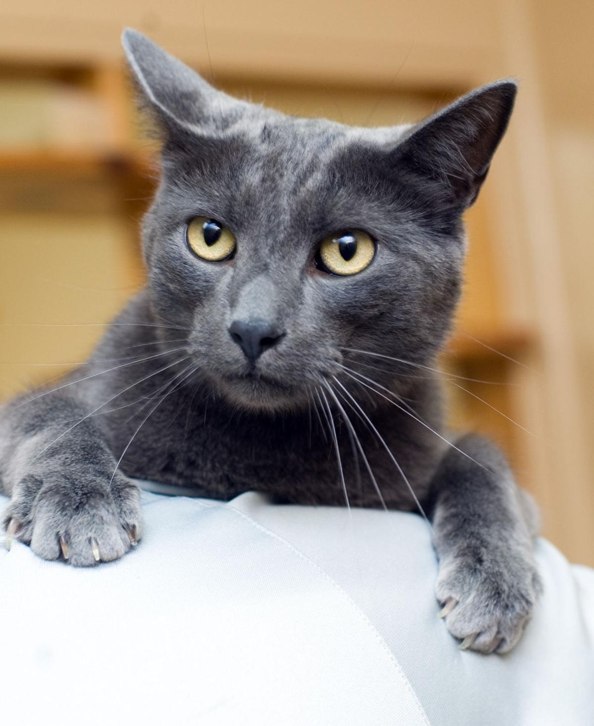 070216-mat-pets-cat-KK.jpg