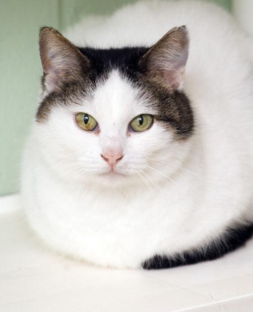 041115-mat-pets-cat-KK.jpg