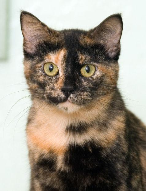 040415-mat-pets-cat-KK.jpg