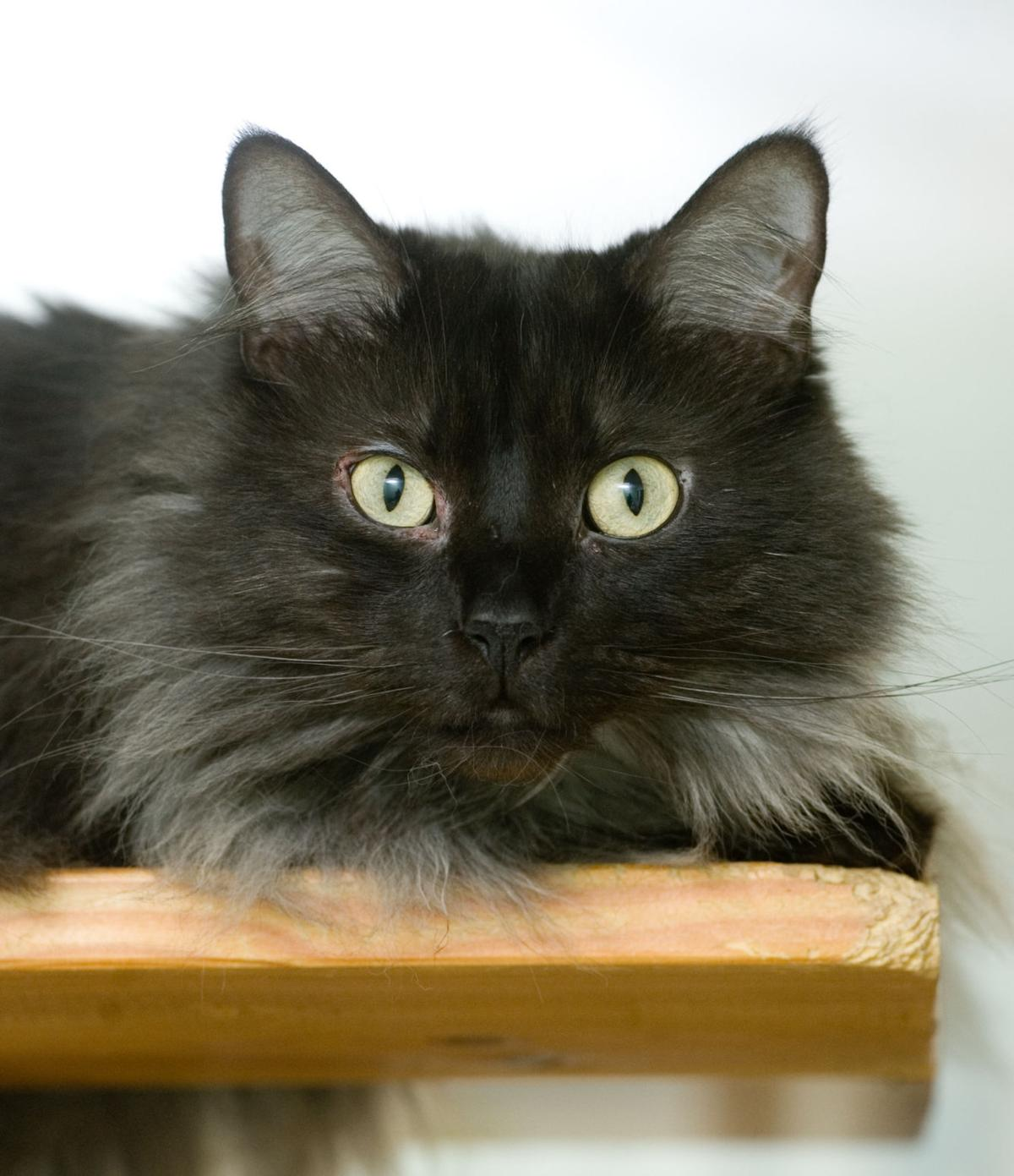 051615-mat-pets-cat-KK.jpg