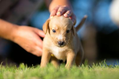 LIFE-PETS-DOGS-LIFESAVING-DMT