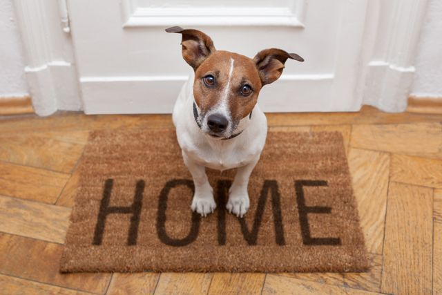 http://www.dreamstime.com/royalty-free-stock-image-dog-welcome-home-image26629656