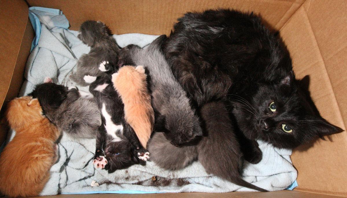 050915-mat-pets-dec-kittens-1