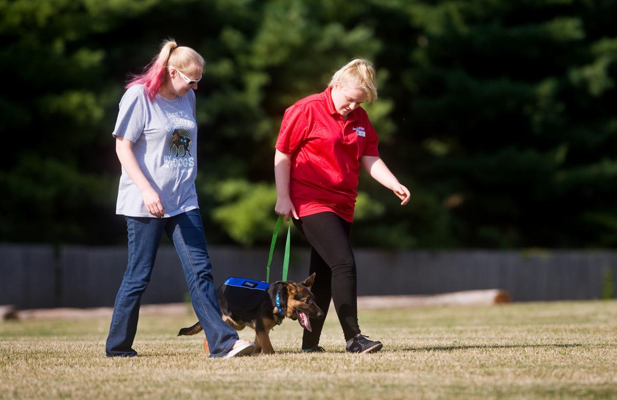 Arthur Woman Trains A Variety Of Service Dogs Local Jg Tc Com