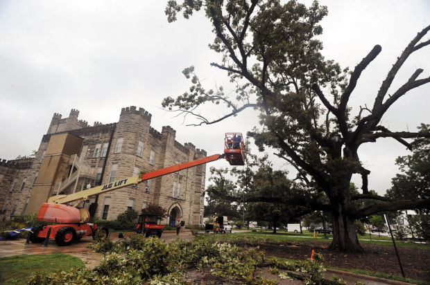 EIU Old Main Tree 08/08/14