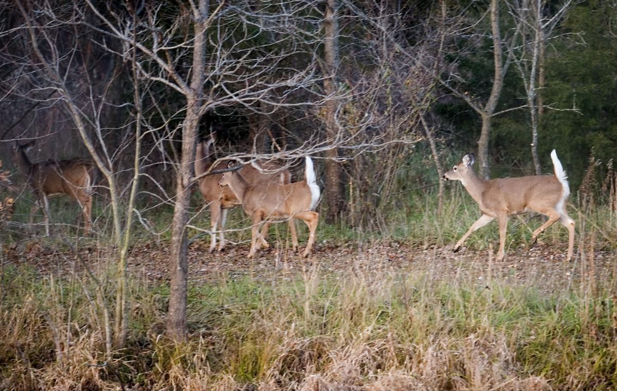 Deer Populations 11/21/18
