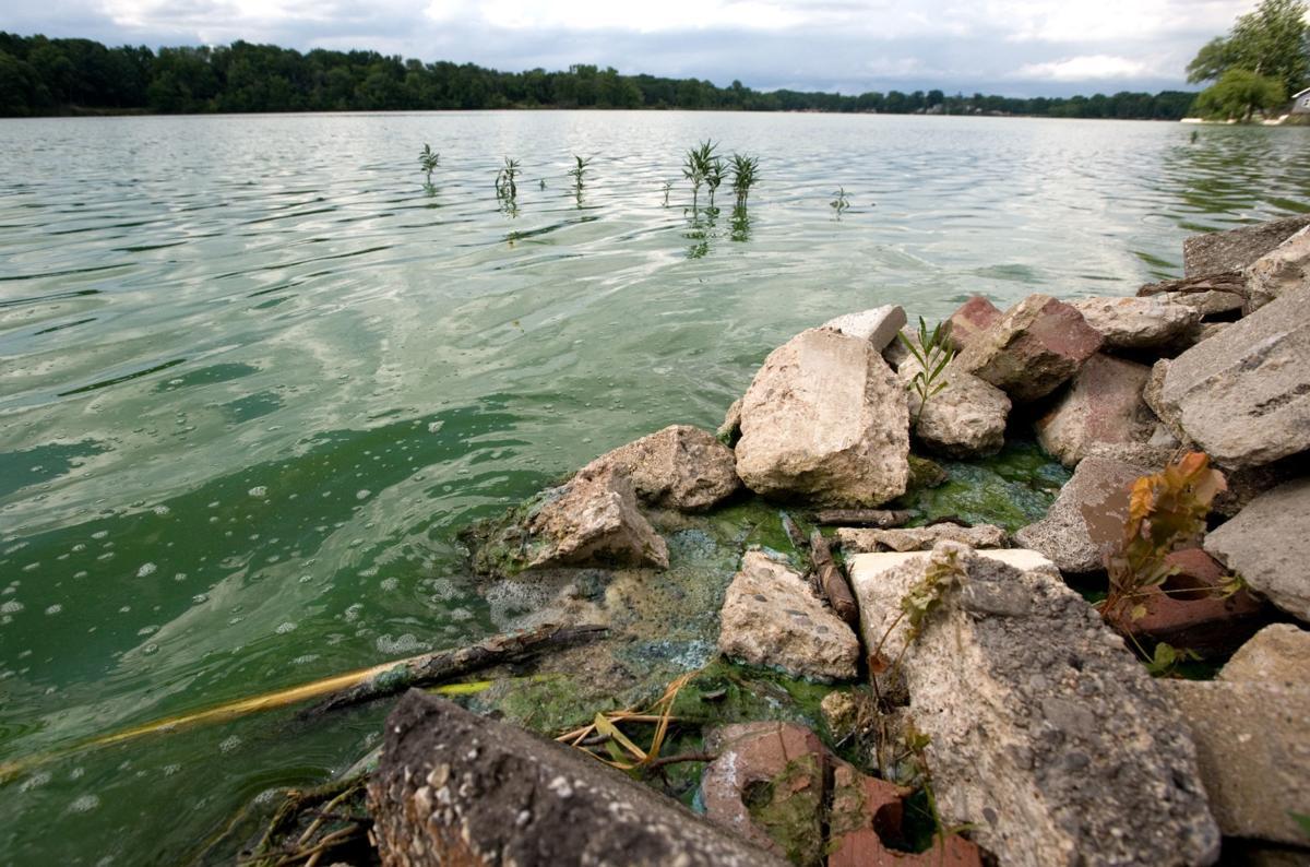 Lake Paradise Algae 07/05/18 (1)