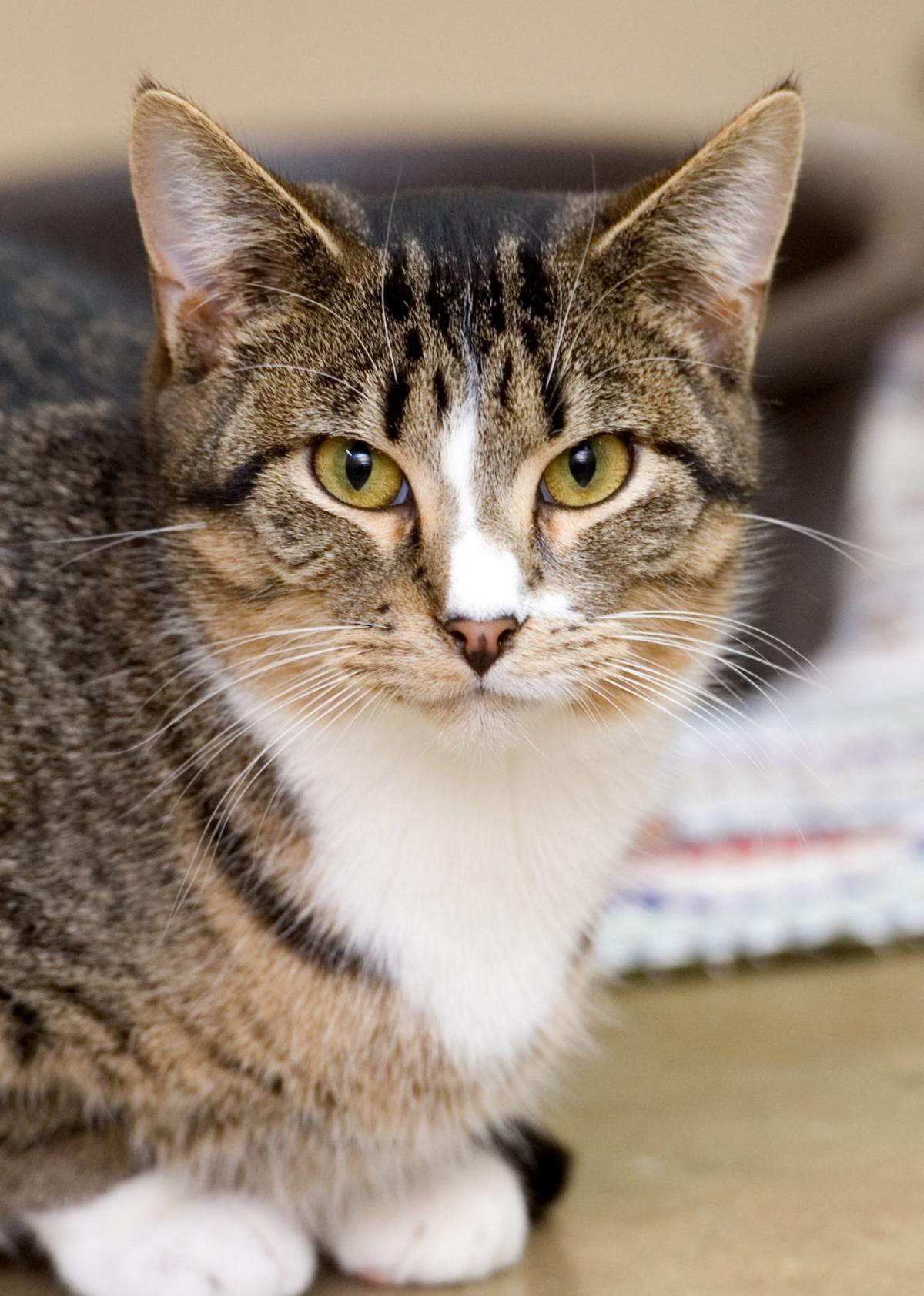 120317-mat-pets-cat-KK.jpg
