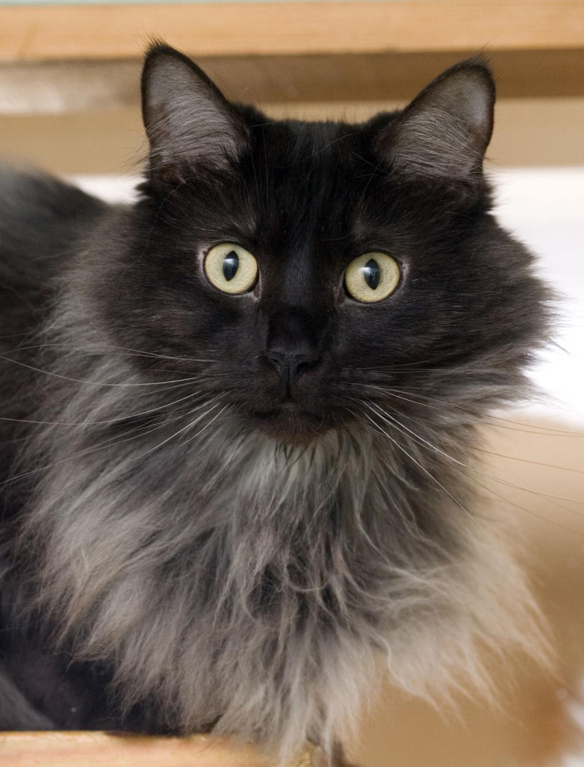 042515-mat-pets-cat-KK.jpg