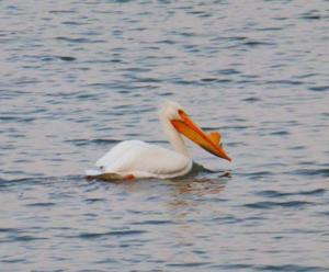 Wildlife Watch: Nature up close at Lake Mattoon
