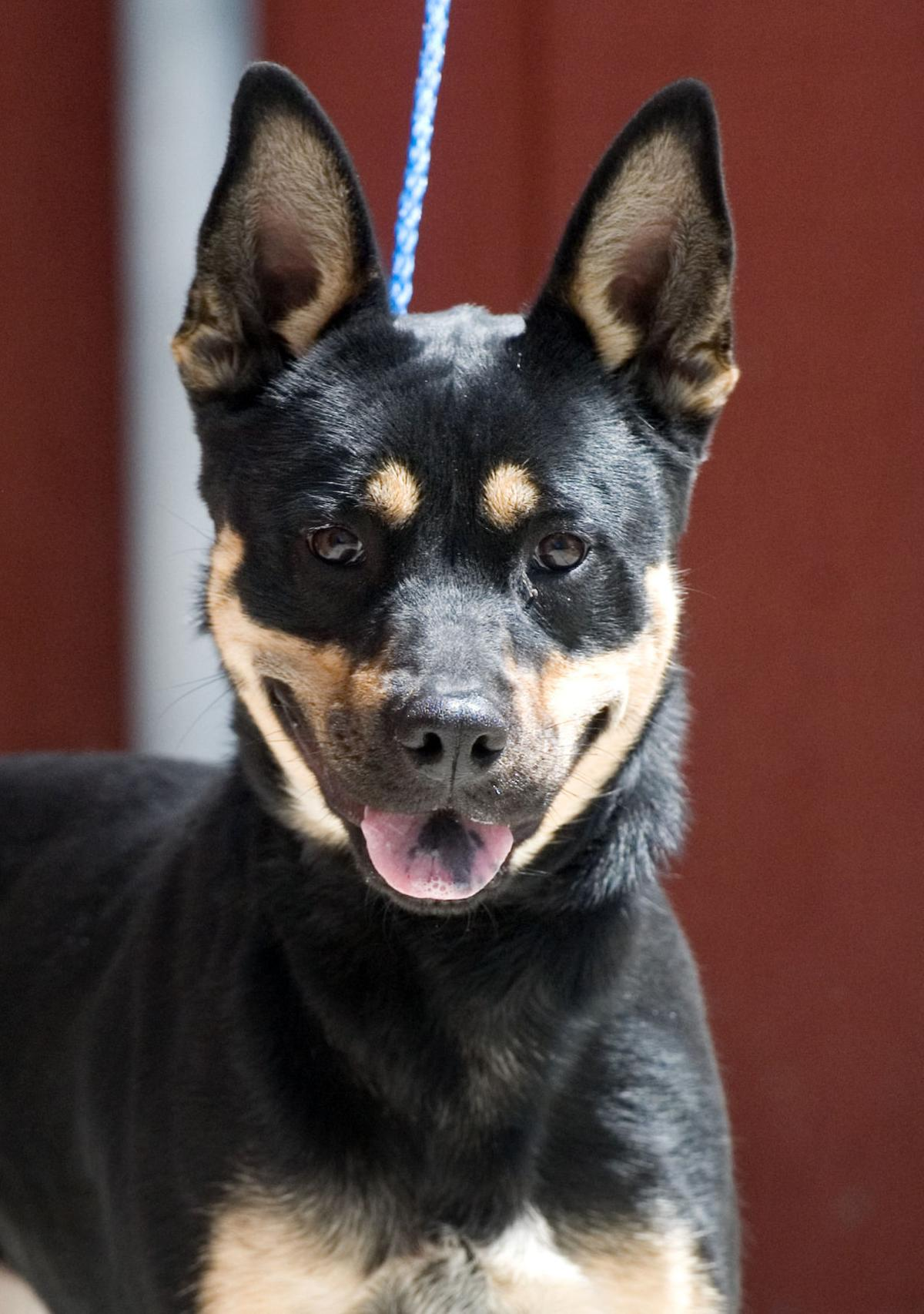 042515-mat-pets-dog-KK.jpg