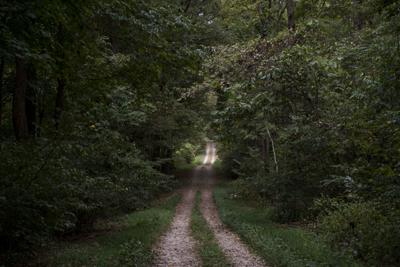 Snake Road