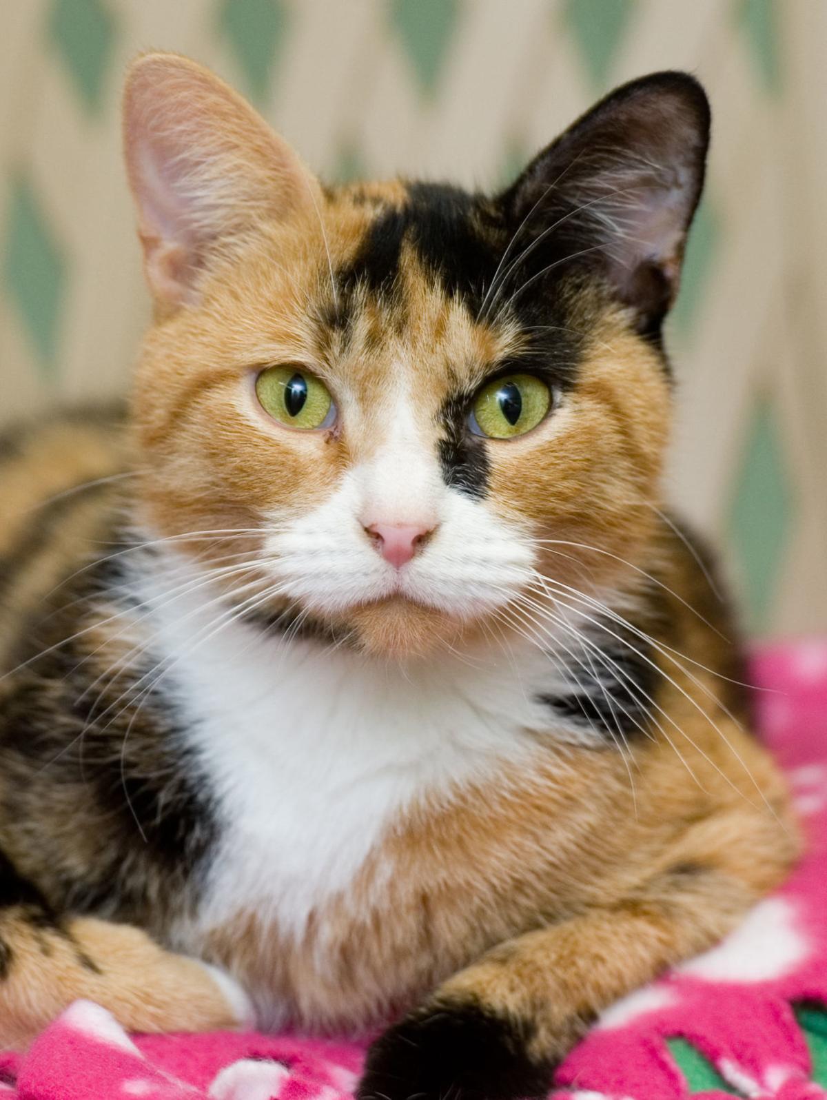 120818-mat-pets-cat-KK.jpg