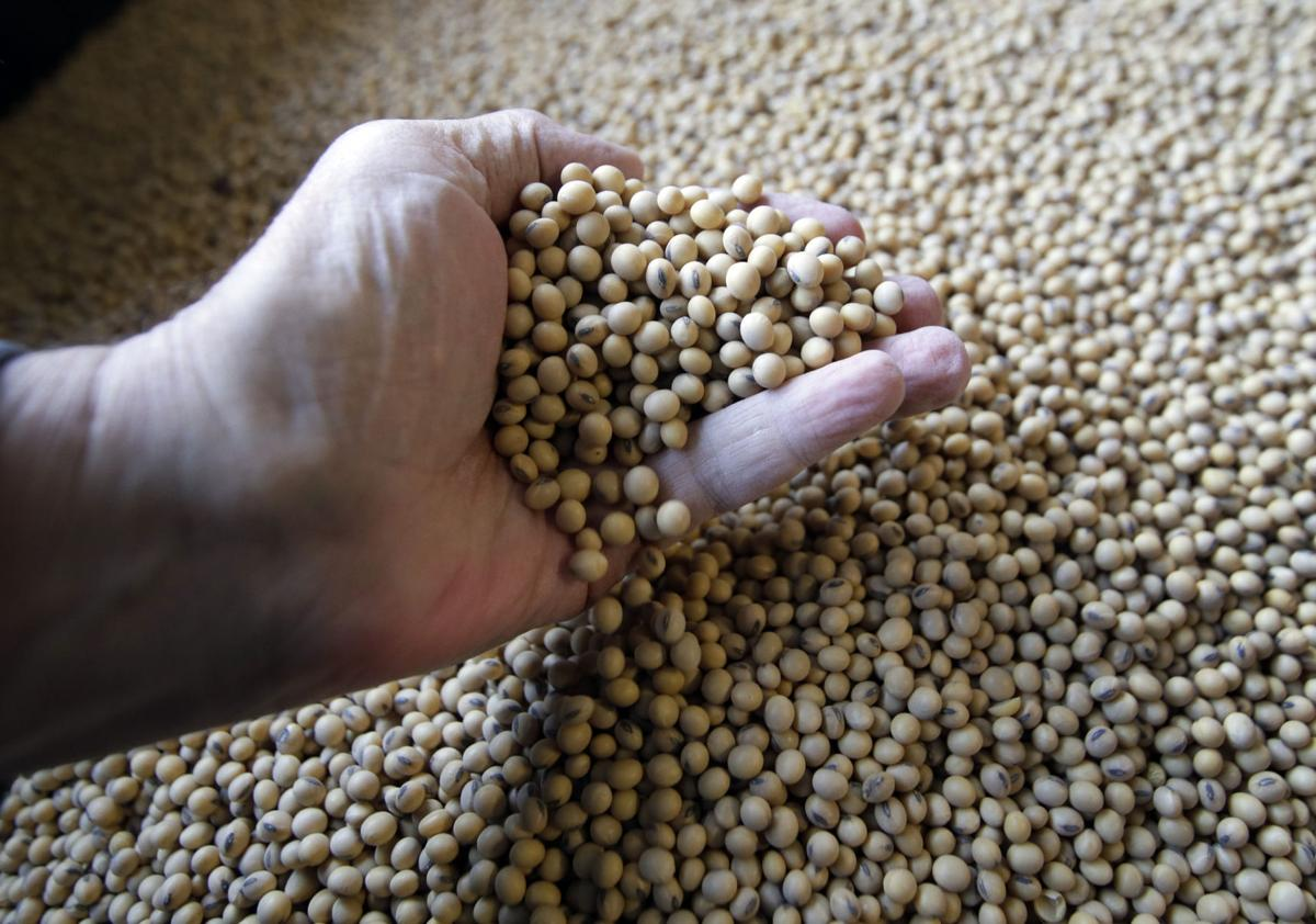 Sorted soybeans - AP File Photo