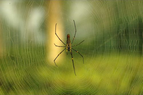 11 Ways To Get Rid Of Spiders You Probably Haven't Tried Yet