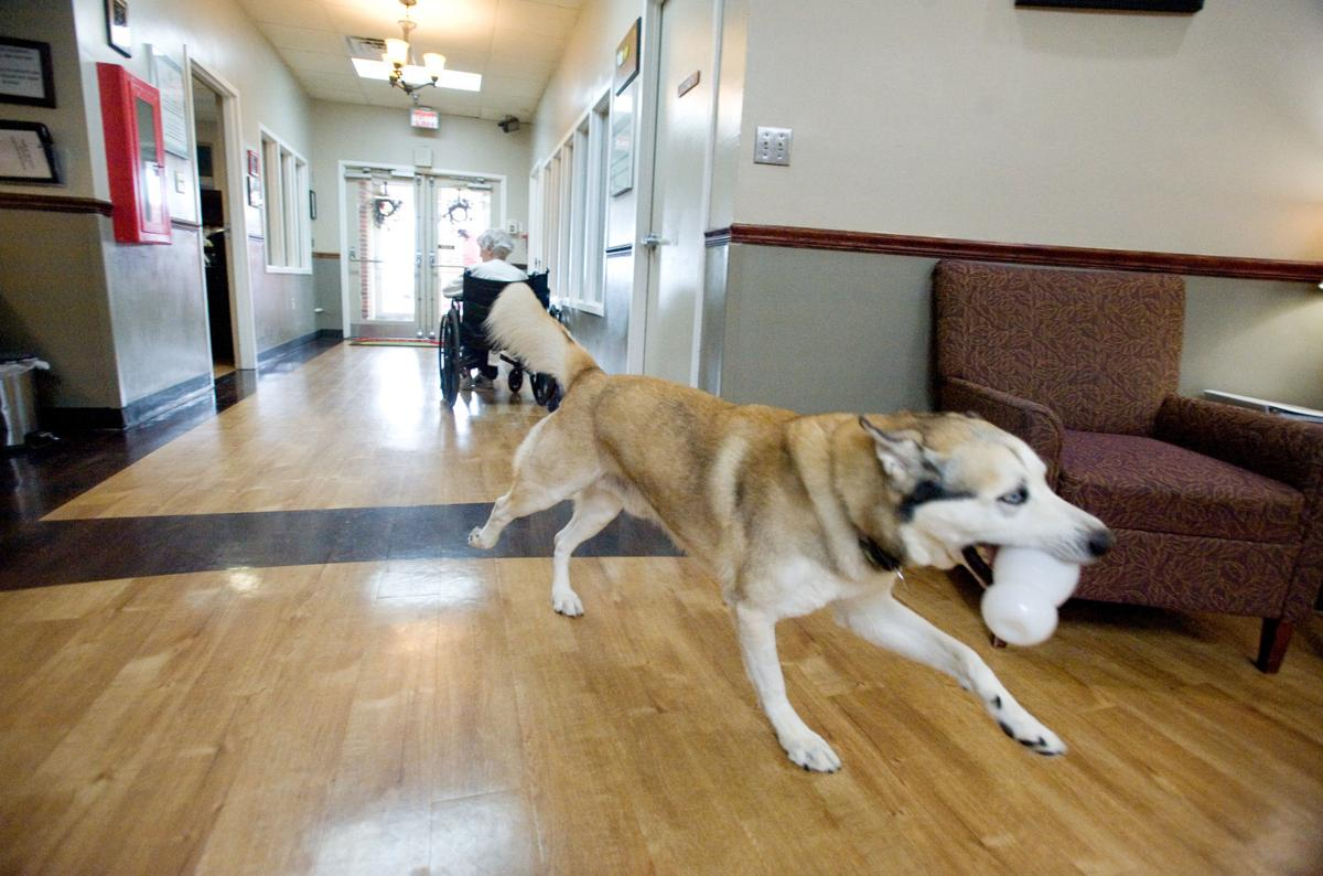 Mattoon Rehab Residents Have 2 Canine Companions Local Jg Tc Com