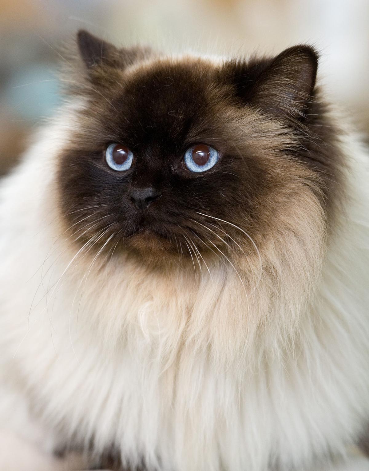 041418-mat-pets-cat-KK.jpg