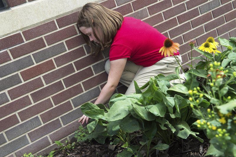 St. Mary's students enjoy butterfly garden replanted after 2011 tornado