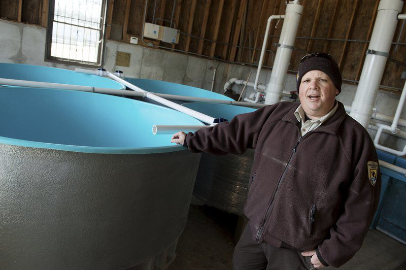 Hatchery officials hope new tanks will help reproduction of endangered pallid sturgeon