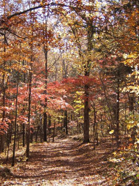 Andy Ostmeyer: October in the Ozarks offers great hiking