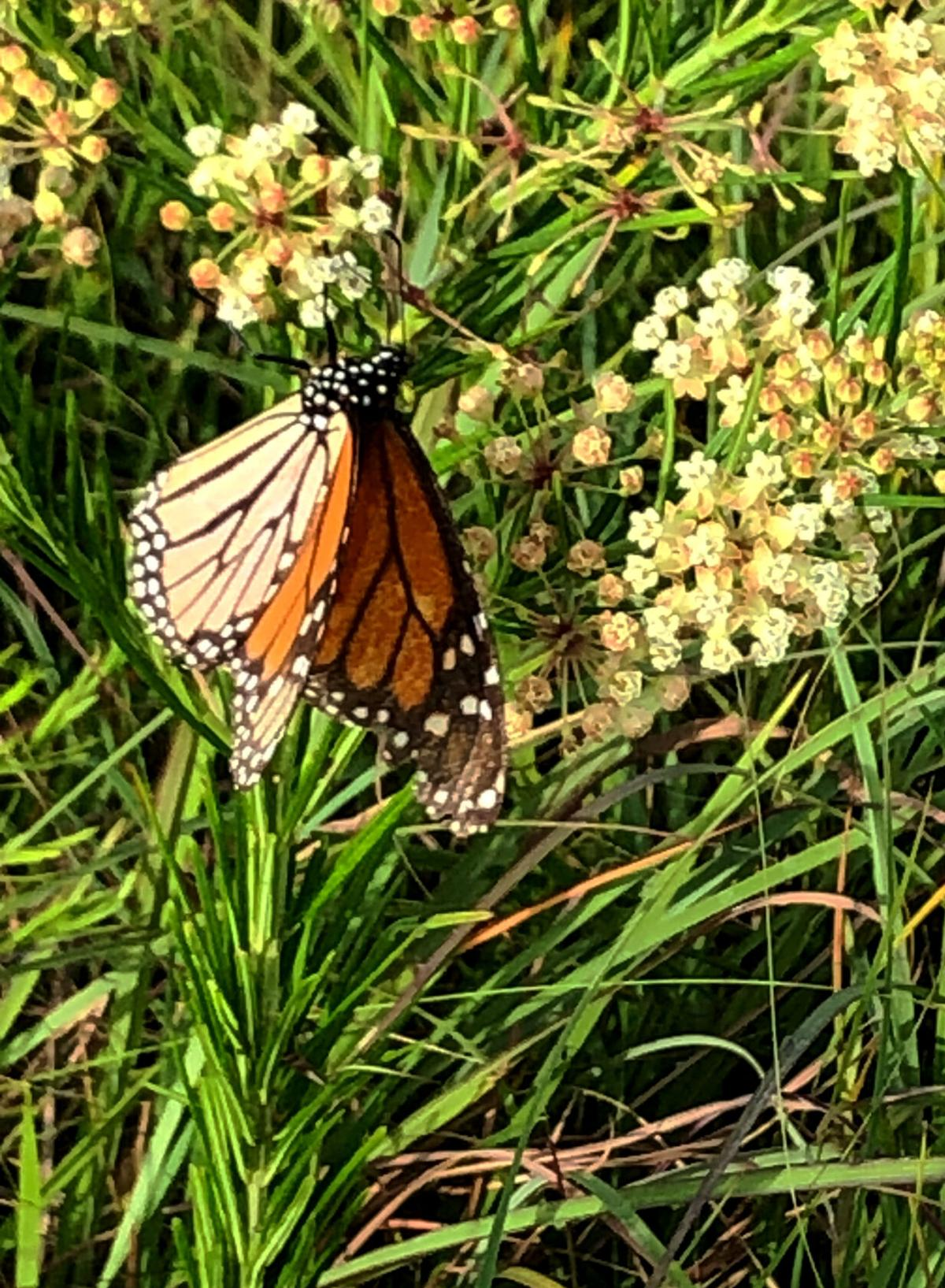 072121 Prairie picture 1