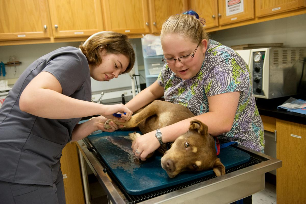 Crowder Vet Tech Program Honored As One Of Best In The Country