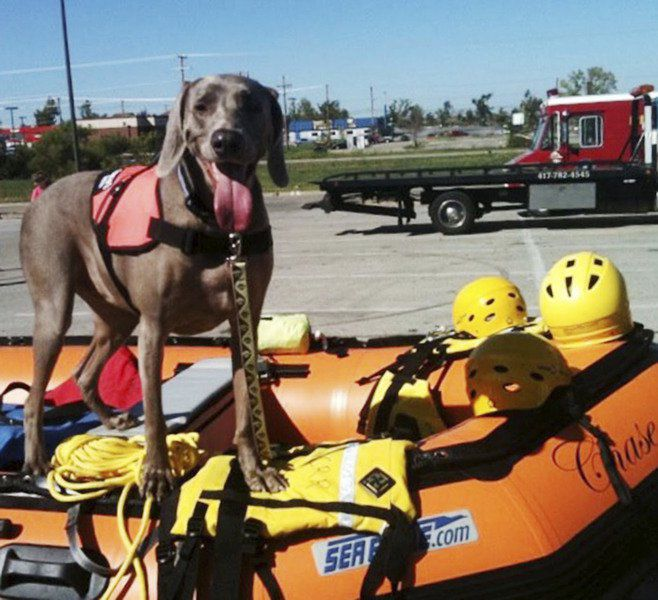 Lily, Joplin tornado search-and-rescue dog, dies at age 10