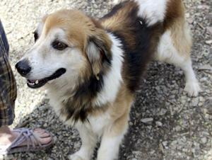 Former farm dog yearns for forever family